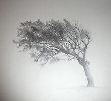 Tree by Tam Edey