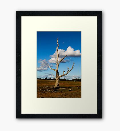 bright lone tree Framed Print