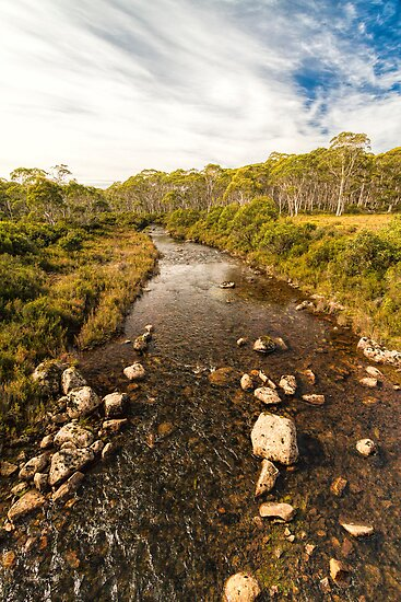 Navarre River, Nr. Derwent Bridge, Tasmania #3 by Elaine Teague