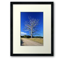 Graceful tree in colour Framed Print
