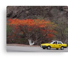 tropical taxi - taxi tropical Canvas Print