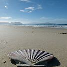 Beach Perspective by DEB CAMERON
