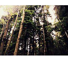 Green Giants Photographic Print