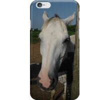 Gray Gelding at the Fence iPhone Case/Skin