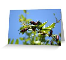 Blister Beetle Insect Infestation on Garden Honeysuckle Greeting Card