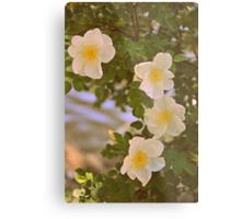Sweetest Bloom Metal Print