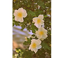 Sweetest Bloom Photographic Print