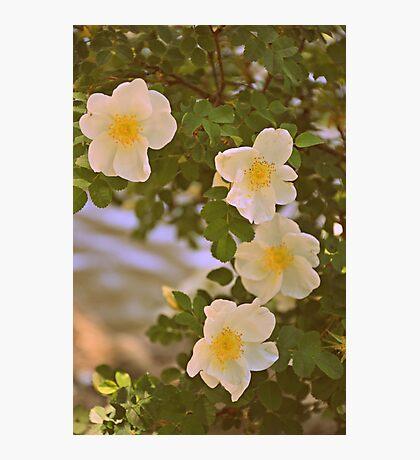 Sweetest Bloom Photographic Print