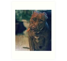 Pitbull Dog with a Cigar in his Mouth Art Print