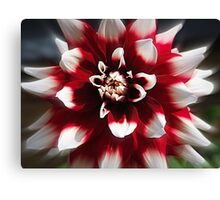 A Display of Perfection Canvas Print