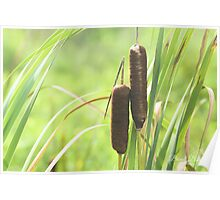 Cat Tails Poster