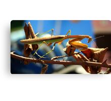 Praying Mantis on a Stick Canvas Print