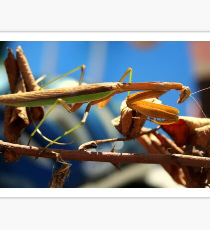 Praying Mantis on a Stick Sticker