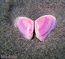 Pink Butterfly Made of Seashells  by ibadishi