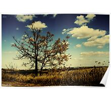 A Yellow Tree in a Middle of a Dry Field - Wide Angle Poster