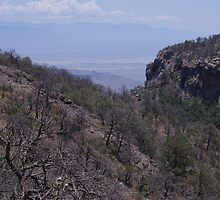 The Route to Emory Peak - Chisos Mountains - Big Bend National Park in June by seymourpics