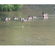 Momma Goose and her lineup Photographic Print