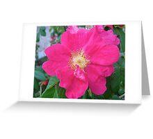 Governor General's Rose  Greeting Card