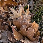 Frosty leaves  by Georgia Mizuleva