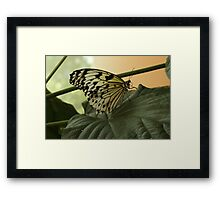 The Monochrome in Color Framed Print