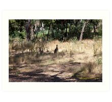 Kangaroos at Hanging Rock, Central Victoria, Australia Art Print