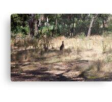 Kangaroos at Hanging Rock, Central Victoria, Australia Metal Print