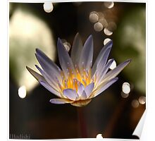 Water Lily with White Bokeh Drops Backgrouns Poster