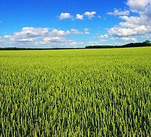 The Wheat by Julian Chan
