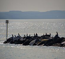 Cormorants On The Rocks At Lyme,Dorset. UK by lynn carter