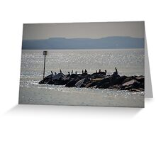 Cormorants On The Rocks At Lyme,Dorset. UK Greeting Card
