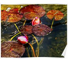 Summer at the Lily Pond Poster