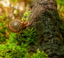 snail and old fungi by Manon Boily