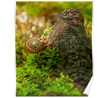 snail and old fungi Poster
