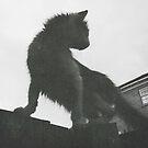 Cat by Niralee Modha