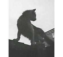Cat Photographic Print