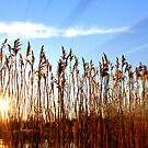 Deep In The Rushes by LittlePhotoHut