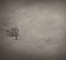 desolate by Paula Burgoon