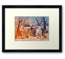 France - White Horses and Bull in The Camargue Framed Print