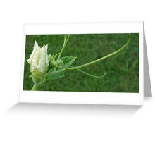 Gourd Blooms Greeting Card