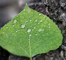 After the Rain II by Nate Welk