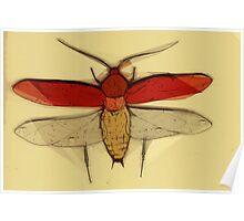 Insect Print 2 Poster