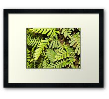 Wild Fern Framed Print