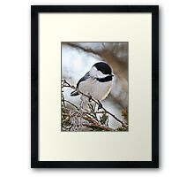 I may be tiny, but you should see me fly Framed Print