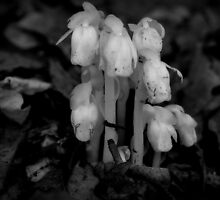 Emerging from the Forest Floor_Black and White Indian Pipes by Hope Ledebur