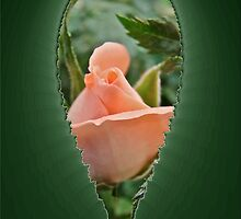 Heart Of My Heart by MotherNature