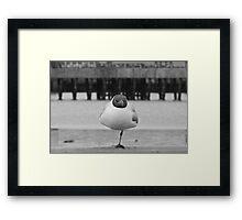 Seagull?   Not me!  I'm really a stork! Framed Print