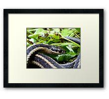 Eye of the Serpent Framed Print