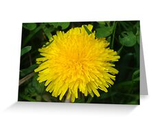 Yellow Giant Dandelion Flower Greeting Card