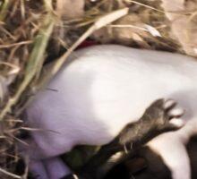 rabbits nest, britannia petite Sticker