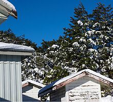four sheds by Anne Scantlebury